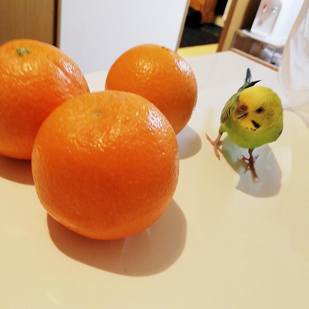 差し入れのオレンジを狙っているのは・・・